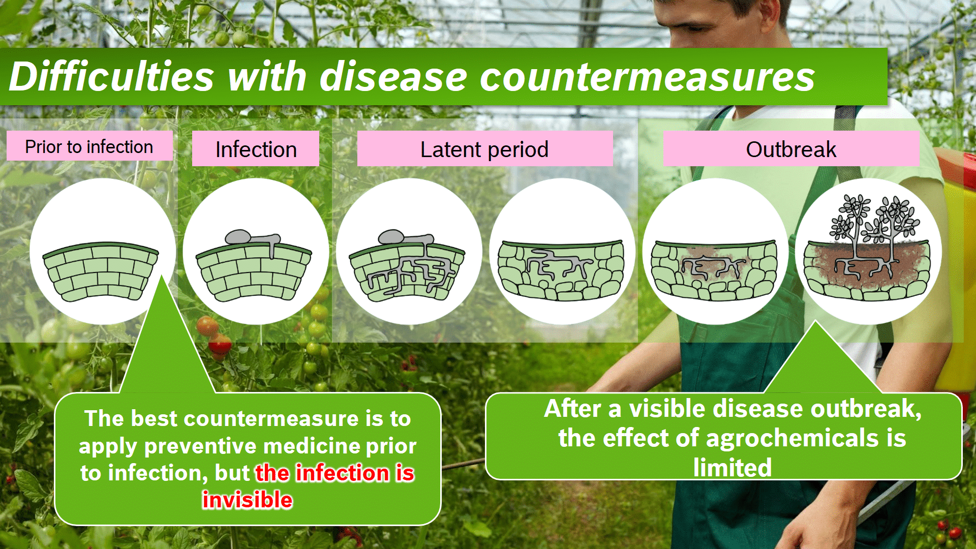 Graphic showing the difficulties in combating plant diseases