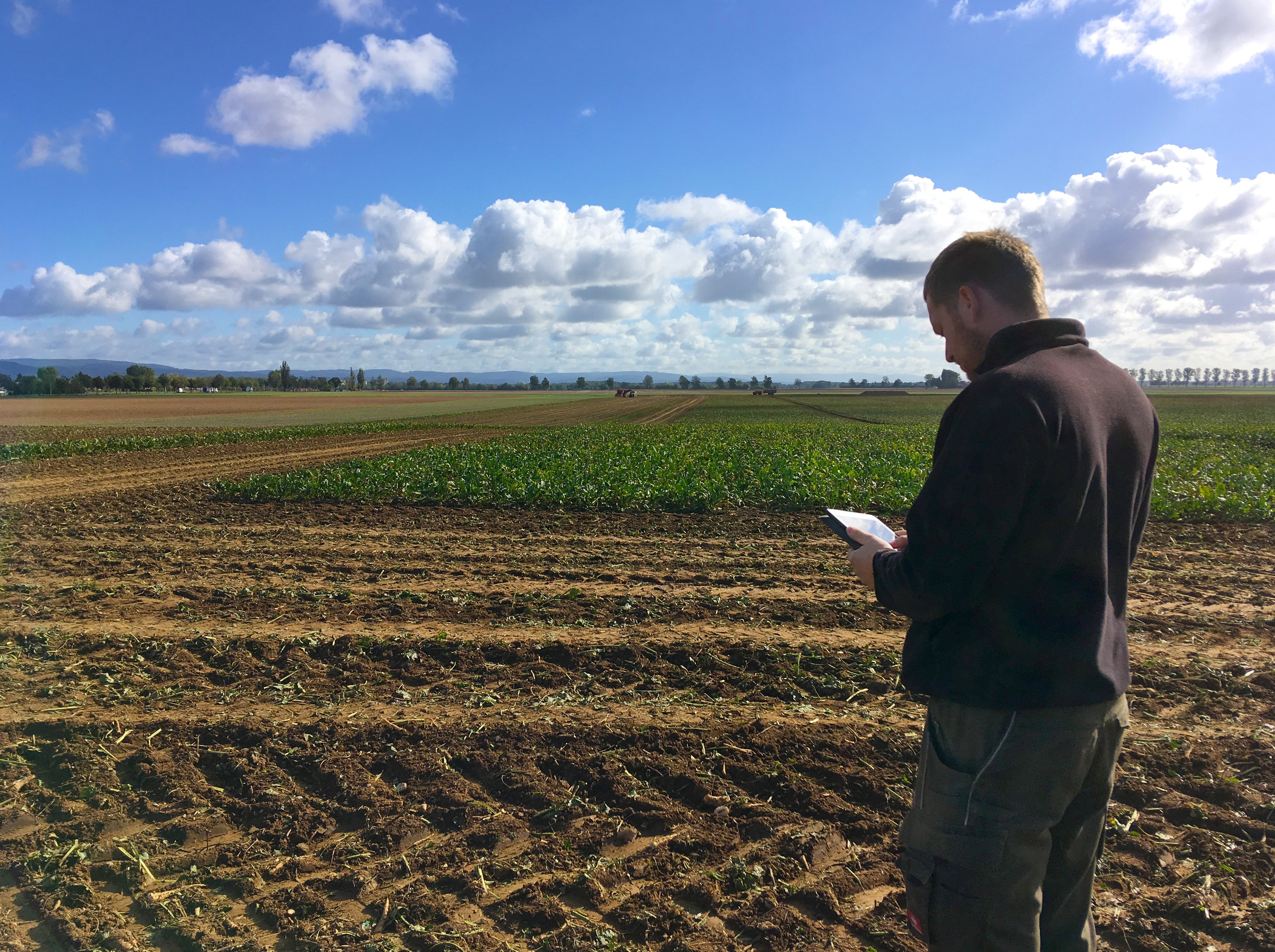 A man holding a mobile device looking at agricultural IoT data and standing in front of his field.
