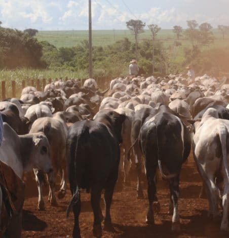 Connected agriculture: Beefed-up networking in Brazil