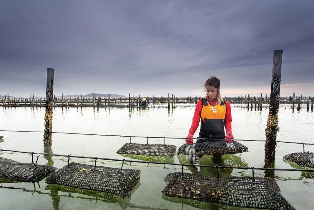 oyster leases tasmanian shore yield agriculture