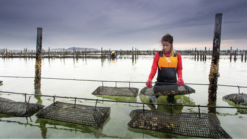 Woman standing in the middle of an oyster farm. The right connectivity solution (sensors + device management software + data analytics) enables remote monitoring and subsequently convenient and reliable control of the crop production process.