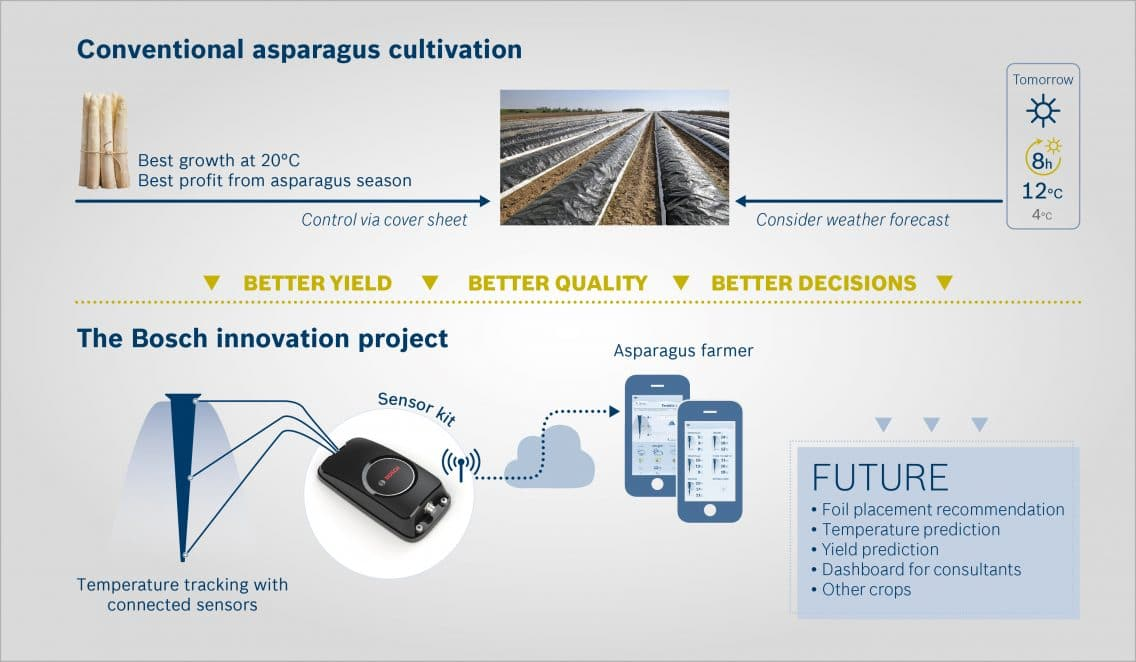 Connected sensor solution for asparagus growers: data on temperatures in the asparagus beds are transmitted to a smartphone, so farmers can track temperature changes in detail