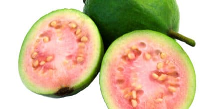 Taste of Google Guava